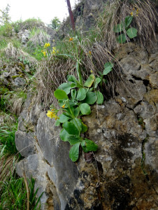 As we approached the summit, we noticed little flowers growing out of the rocks.