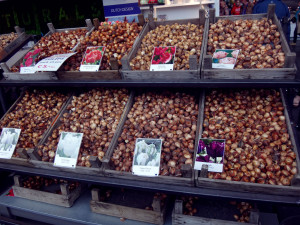 I soooo wanted to shop here for tulip bulbs but tulips do not do well in the tropics where I live and it is illegal to bring tulip bulbs in your luggage into the USA