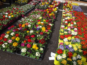 Spring is coming! Flowers are for sale everywhere in Italy.